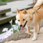 犬の散歩のマナー意外と知らないマナー違反続出!?