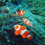 熱帯魚が飼いたい!必要なものと基礎知識まとめ!