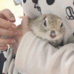 【実録レポート】リチャードソンジリスの爪切りで病院に行ってきました!